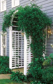 Free Arbor Plans – Arch Style