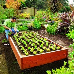 Raised Planting Bed Plans